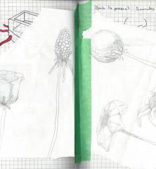 Wesley Norris (BDes 2015) / SEED course / DSGN3021 / NSCAD University / Interdisciplinary Design / Kaltenbach
